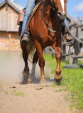 Western horse riding. Close up Royalty Free Stock Photos