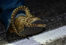Western massasauga sitting on a boot Stock Image