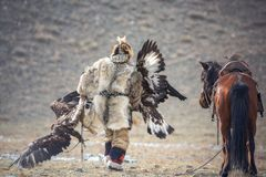 Western Mongolia, Golden Eagle Festival. The Mongolian Nomad Bears Two Golden Eagles In His Hands After The `Fox Skin` Competition stock image