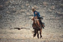 Western Mongolia,Golden Eagle Festival.Mongolian Rider-Hunter In Blue Clothes And A Fur Hat On Brown Horse  And The Flying Golden Royalty Free Stock Image
