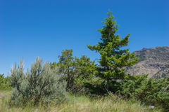 Western Mountain Forest Stock Images
