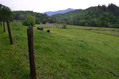 Western NC farm cow pasture. Western NC rural country farm cow pasture and mountains Royalty Free Stock Photo