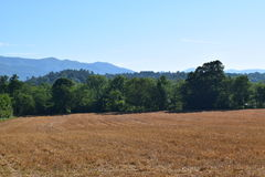 Western NC farmers field of cut golden hay. With trees and mountains in the background royalty free stock photos