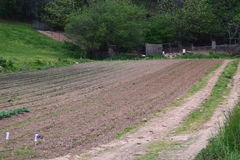 Western NC mountain farm plowed garden. Growing stock photos