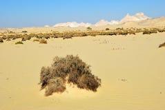 Western pustynia, Sahara, Egipt Obraz Royalty Free
