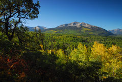 Western Slope. Majestic mountains and golden aspens in fall royalty free stock photos