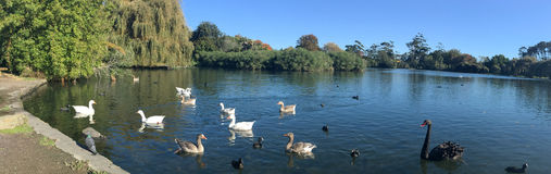 Western Springs park in Auckland New Zealand. Panoramic landscape view of Western Springs park in Auckland, New Zealand Royalty Free Stock Image