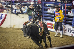 Western Stock Show in Denver. Stock Photography