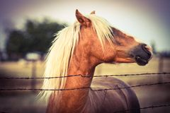 Western Style Horse Royalty Free Stock Images