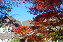 Western-style house and Maples in the Kyu-Furukawa Gardens, Tokyo Royalty Free Stock Photography