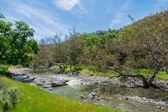 Western Sycamore trees on the shoreline of a creek, Sunol Regional Wilderness, San Francisco bay, California stock photo