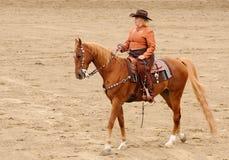 Western tack on a Saddlebred Stock Images