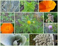 Western U.S. Herbs Collage Stock Image