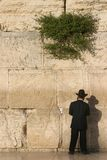 Western wall. Orthodox Jew at the Western Wall Stock Photography