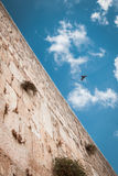 Western wall with bird in the sky, Jerusalem, Israel Stock Photo