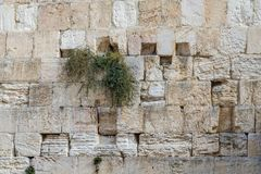 The Western Wall in Jerusalem, stone wall background. The Western Wall closeup, background of stone wall, Temple Mount in the Old City of Jerusalem, Israel Stock Photography