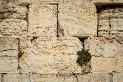The Western Wall in Old City of Jerusalem, Israel. Royalty Free Stock Photography