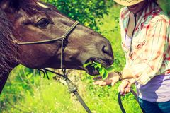 Western woman taking care of horse on meadow stock photos