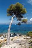 Westernu wybrzeże Corsica wyspa Zdjęcie Royalty Free