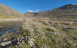 Westfjorde Lizenzfreie Stockfotografie