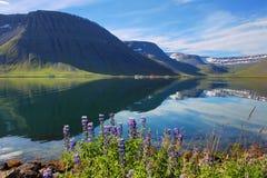Westfjords royalty-vrije stock fotografie
