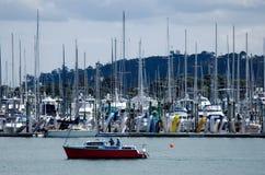 Westhaven Marina Auckland Nowa Zelandia Zdjęcie Royalty Free