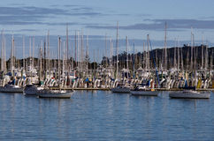 Westhaven Marina - Auckland Stock Photography