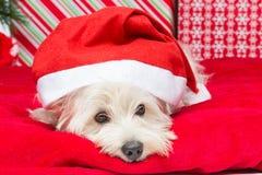 Westie στο καπέλο Χριστουγέννων στοκ φωτογραφίες με δικαίωμα ελεύθερης χρήσης