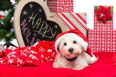 Westie in christmas hat Royalty Free Stock Image