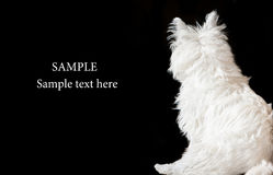Westie dog frame Royalty Free Stock Images