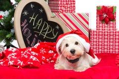 Westie no chapéu do Natal Imagem de Stock Royalty Free