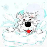 Westie in the snow Stock Images