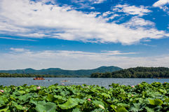 Westlake in Summer Royalty Free Stock Photography