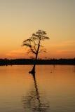 Westlandung-Baum Lizenzfreie Stockfotos
