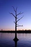 Westlandung-Baum Lizenzfreies Stockfoto