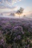 Westleton Heath Stock Images