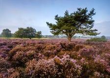 Westleton-Heide Stockfotografie
