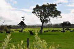 Westliches australisches Ackerland Stockfoto