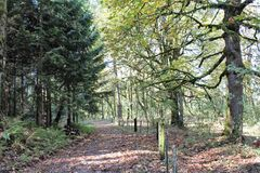 Westminster Abbey Scenic Woodland. While a great portion of the monastic lands of Westminster Abbey is used for farming, the grounds offer scenic woodland trails Stock Photography