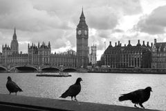 Westminster stock image
