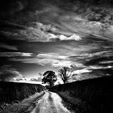 Weston Lane and tree in Oswestry, Shropshire, England Royalty Free Stock Images