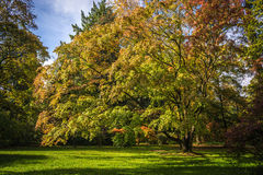 Westonbirt Arboretum Arkivbild