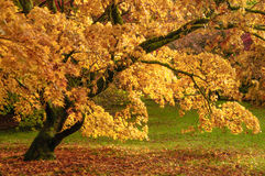 Westonbirt Arboretum Royalty Free Stock Images