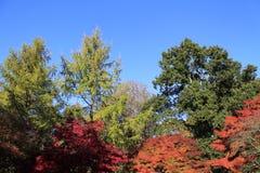 Westonbirt Trees stock photo