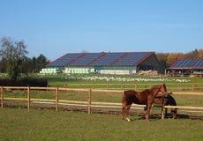 Westphalian horses in front of farm Stock Photos