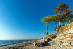 Weststrand Trees 1 Royalty Free Stock Image