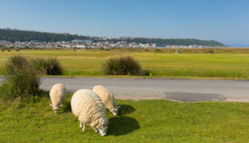 Westward Ho from Northam Burrows park Devon Royalty Free Stock Image