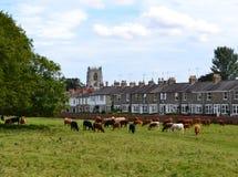 Westwood Beverley стоковое фото rf