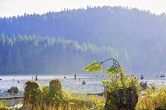 Westwood See während des Falles in Nanaimo BC Kanada lizenzfreie stockfotografie