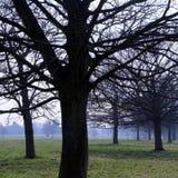 Westwood Yorkshire do leste Inglaterra de Beverley Fotografia de Stock